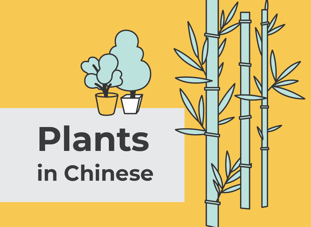Plants in Chinese   Learn Chinese Vocabulary with NihaoCafe